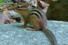 Chipmunks 2
